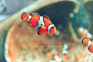 I found Nemo by Chanklish