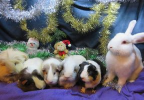 Five Christmassy piggies and a bunny by Candyfloss-Unicorn