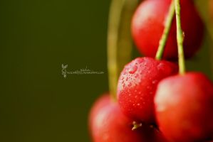 Mountain ash by reichan79