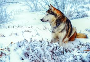 Lord Of Ice by Wild-LifePhotography