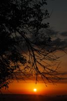 Sunrise over tree by Inguan