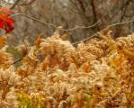 Shades of Autumn 2015, 7C by MadGardens