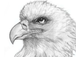 eagle illustration by sillyjo3