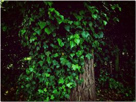 The embrace of ivy... by ansdesign