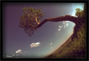 Another Tree On Field by miki3d