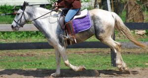 Blue Roan Pony Stock 4 by lee-mare