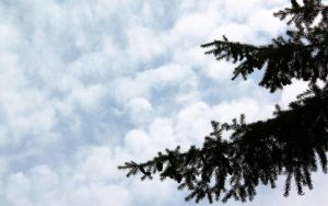 Wallpaper - Branches under Sky by AdMalamCrucem