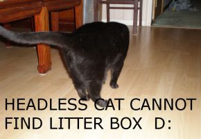 Lolcat by Trivia-Master