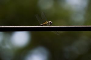 Dragonfly by BS4711