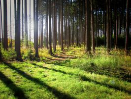 Forest Light by Andenne