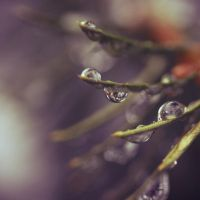 drops by ThisFairyTale