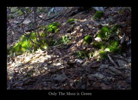 Only The Moss is Green by rcoots