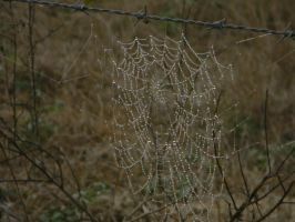 A Glittering Spider Web by gdsbngd2me