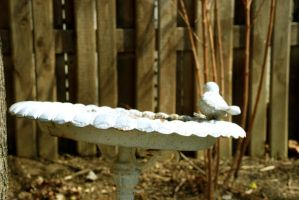 Birdbath by Lisa-Marie-Eva