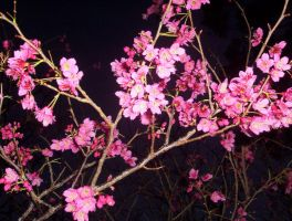 flowers at night by light-kitten