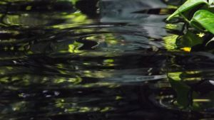 Ripples by DarlingChristie