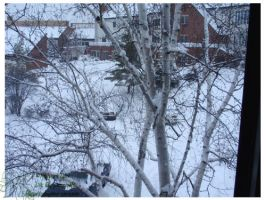2010 5-6 02 Snow Pictures 04 by lilly-peacecraft