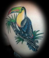 Toucan Tattoo by tobilou