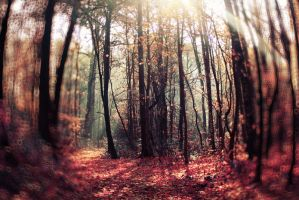Magic forest. by Lentilcia