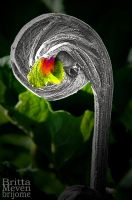 twisted leaf by brijome