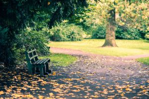 Autumn in the park by ralucsernatoni