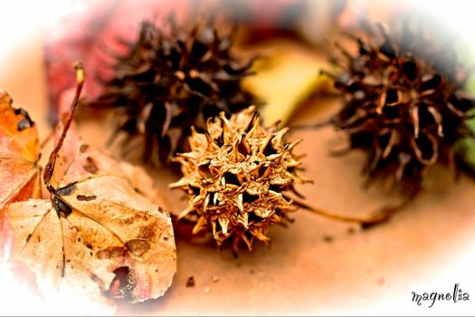 Sweet Gum by FallOut99