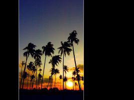 Coconuts Sunset by ol1nk