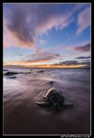 Honu By Twilight by aFeinPhoto-com