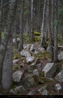 Stone Forest 2 by SalsolaStock