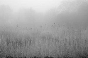 Reeds 2949 by filmwaster