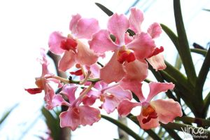 Wild Orchids by vhive