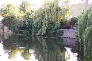 Willow and lilies in York by Brianetta