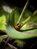 Ms. Lady Bug by MisticMorgue