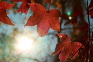 Autum Light by ARTGoddis