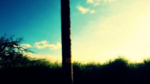 Tall Grass and Blue Sky 2 by goblinsuprising
