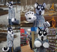Ajax, the Wusky -Partial Completed- by LoneWolf40