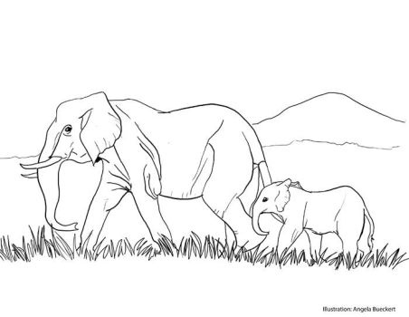 Elephant Colouring Page by AoiKita