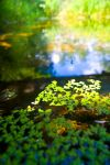 Green pond by nikphotos