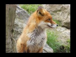 Fox profile by Katana-Tate