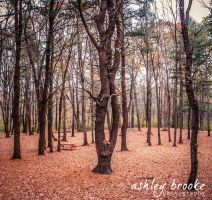 -- Within These Woods -- by AshleyxBrooke