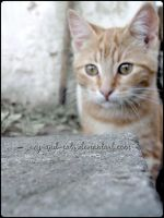 822 by evy-and-cats
