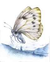 Butterfly by valhadar