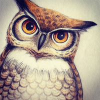 owl color sketch by Leelilly