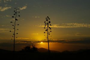 Sunset with Agaves by PatGoltz