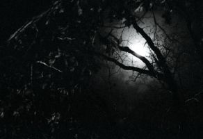 Night Forest by mossig