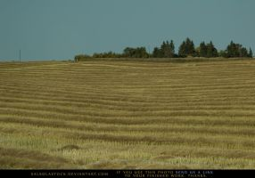 Cut Field by SalsolaStock