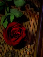 Piano Rose by bubble03