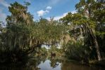 New Orleans Swamps by kbrimson