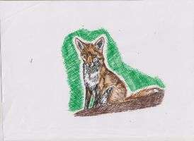 Young fox on hill by ArcticIceWolf