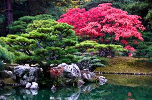 Japanese Garden Tree by IainInJapan